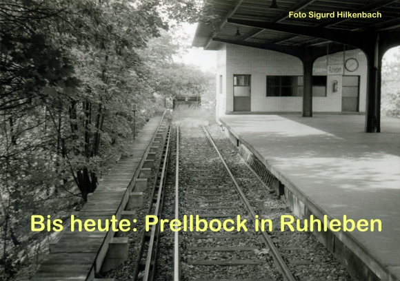 Preebock in Ruhleben